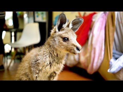 Couple Turn Home Into Kangaroo Sanctuary