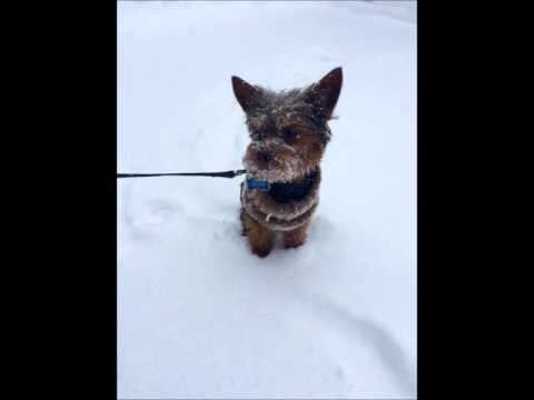 21 Best WGAL Pets In The Snow!