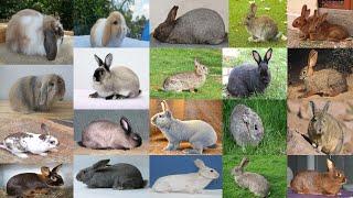 Top 58 species Rabbit name