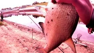 Ловля леща на фидер, донку. река Тура 12.9.18