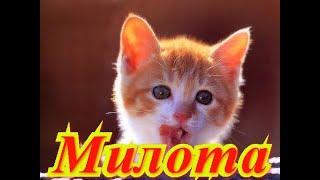 Смешные котята. Позитив.Создай себе хорошее настроение