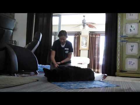 Zara Massage 6 23 16