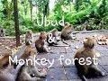 Ubud &  Monkey forest