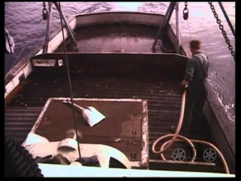 Seldovia and shrimp fishery, 1963