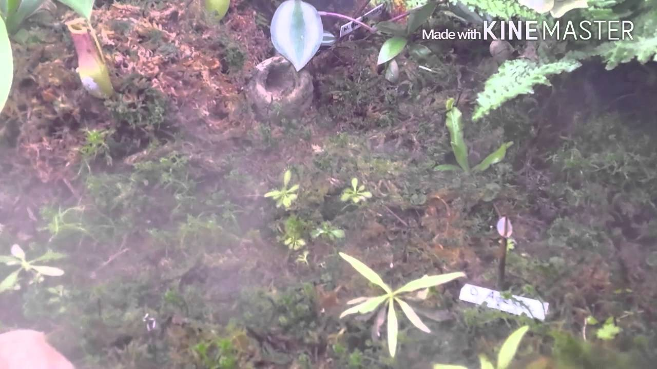 Terrarium plantes carnivores tropical   youtube