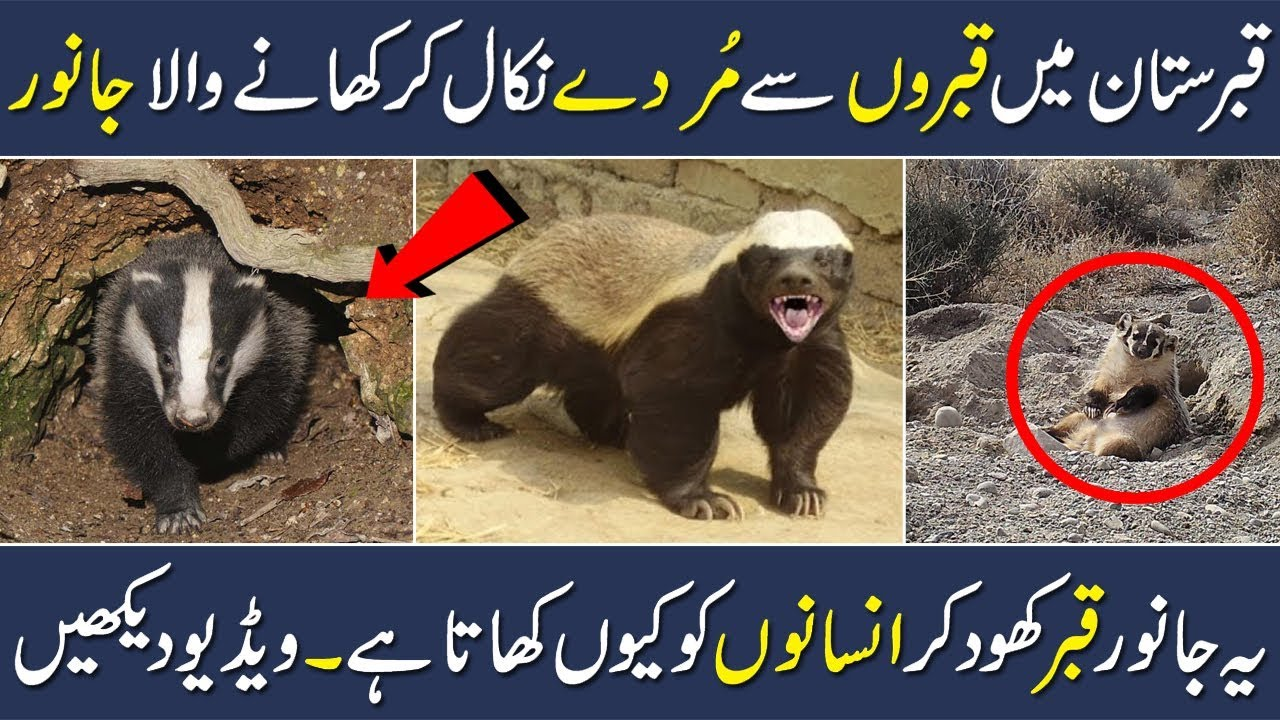 seal animal meaning in urdu