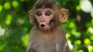 Monkey Temple - Swayambhunath BTS