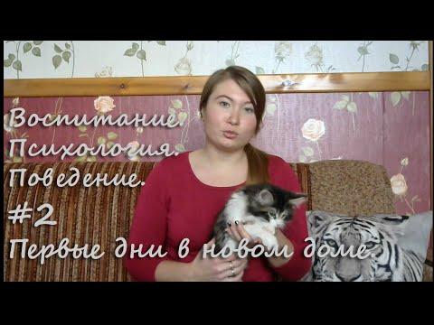 Вопрос: Как приучить двух котят жить в одном доме (см.)?