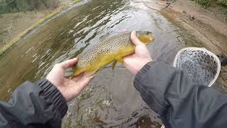 Winter Brown Trout