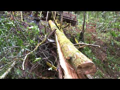 Tree falls on house in Monte Rio