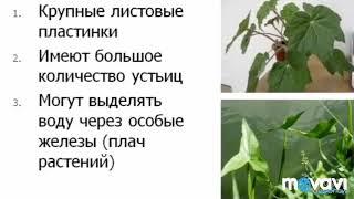 Видоизменения листьев.Влияние факторов внешней среды на строение листьев. Биология в стихах 6 класс.