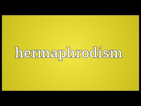Header of hermaphrodism