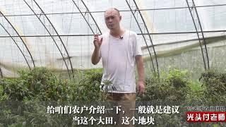 种辣椒,很多农民做的一件事?很多人做错了,想要高产,要看看