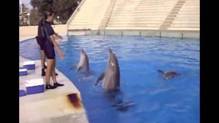 Entrenamiento Delfines | Aquópolis Costa Dorada