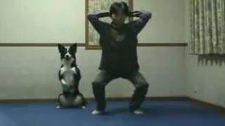Животные занимаются спортом