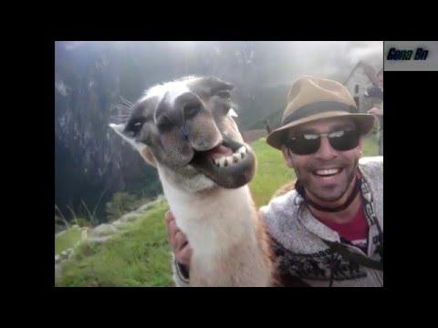 Смотреть видео приколы онлайн бесплатно — самые смешные