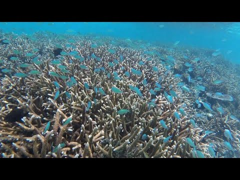 Top Snorkeling on Outer Reefs of Bougainville | Papua New Guinea