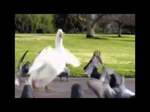 Прикольная видео-подборка с смешной озвучкой :)
