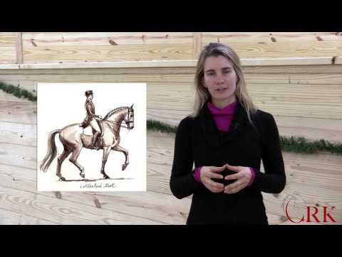 Horse Terms Explained