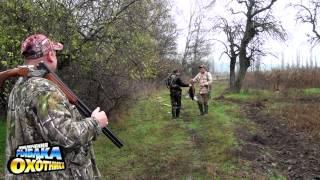Охота на утку и фазана. Болгадский район Одесской области(В этой программе мы встретили утреннюю зорьку по утке и затем в течении дня охотились на фазана., 2014-04-11T18:14:23.000Z)