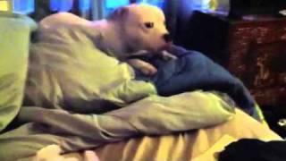 Dog Vs Stuffed Animal