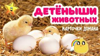 Детёныши животных и их звуки | Карточки Домана | Развивающее видео для малышей