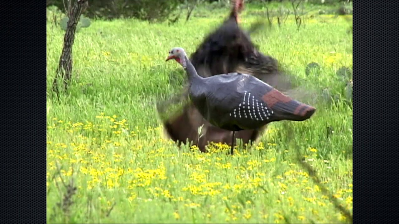 Best Turkey Bow Kill Ever Filmed - Closing the Distance