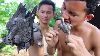 Hunting Birds Dove a Cooking Curry Dove  Eating Delicious to Survival