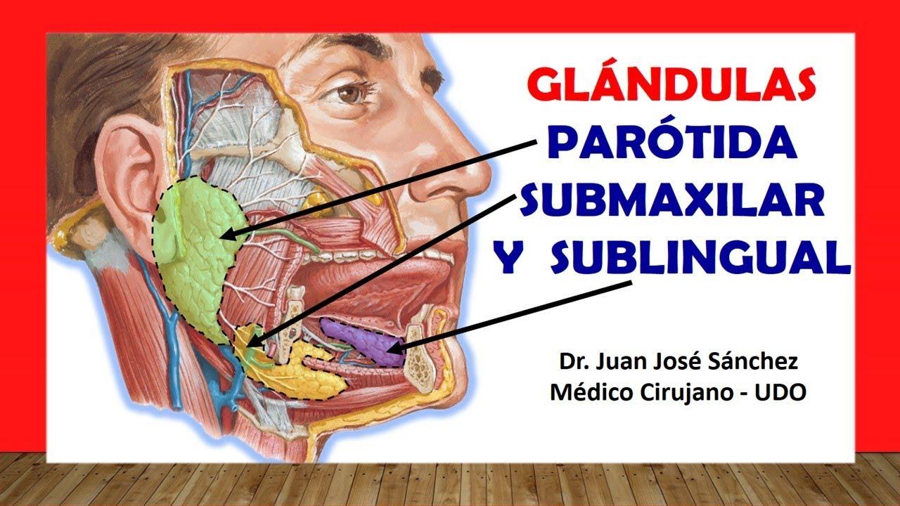 Cuello 12 - Anatomia de la Glandula Parotida, Submaxilar y ...