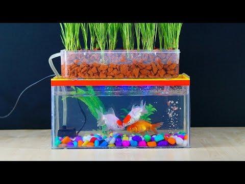 How To Make Mini Aquaponics Aquarium at home