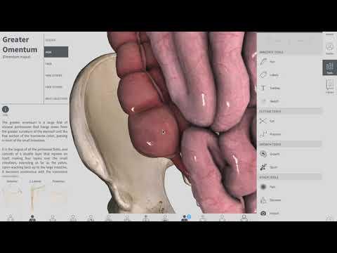 Cecum | GIT | Anatomy