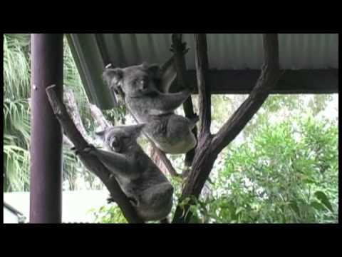Australia & New Zeland Tauck tours