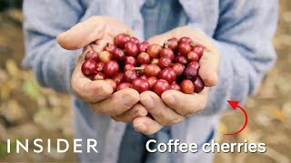 How Brazil Makes Over A Third Of The World's Coffee