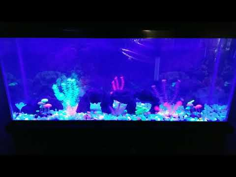Glow In The Dark Pebble In Fish Tank