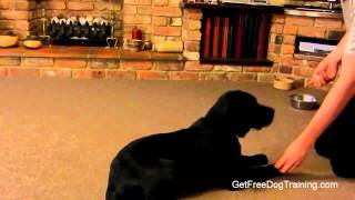 The Online Dog Trainer From Doggy Dan - How To Train A Puppy