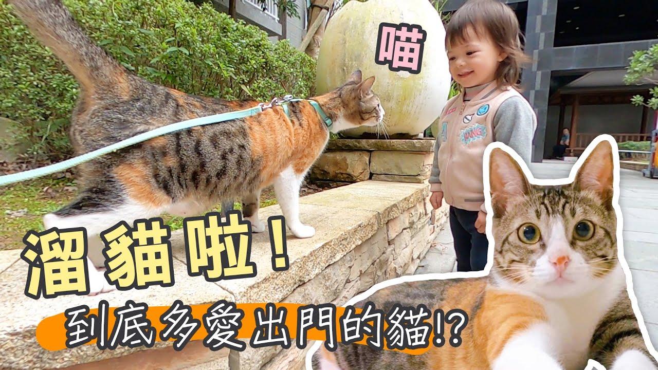 【辛卡の屁貓日記】#9 溜貓啦!到底多愛出門的貓!?