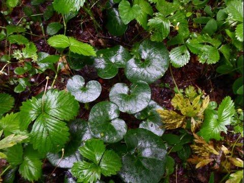 О растениях (выход в лес и домашние заготовки)
