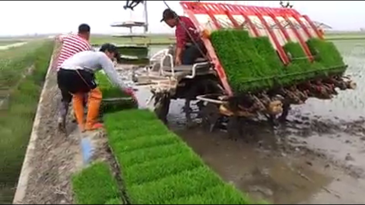 Intelligent Technology Smart Farming Modern Agricultural Processing