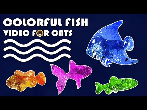 Cat Game on Screen - Catching Colorful Fish! FISH VIDEO FOR CATS TO WATCH.