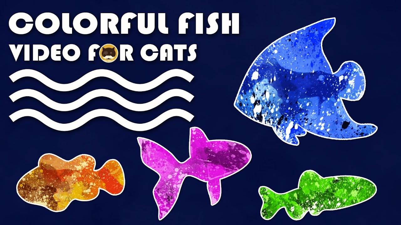 Cat Game On Screen Catching Colorful Fish Fish Video