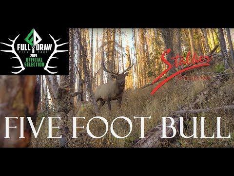 FIVE FOOT BULL - A Stalker Stickbows Film