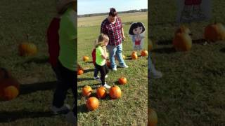 Pumpkin patch 10-29-2016