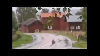 En liten film om Borlänge