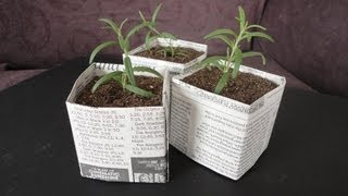 DIY: Newspaper Pots for Seed Starting/Cuttings thumbnail