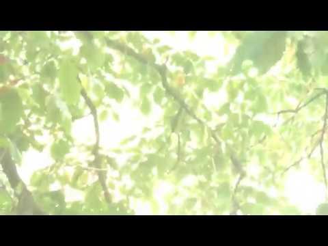 陈破空:周末逛中央公园(2):湖光山色,轻舟碧浪。游人如织,来自世界各国