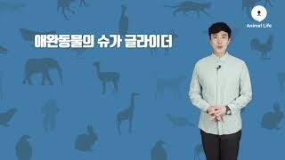[TV동물백과] 날다람쥐의 외모와 습성까지 닮은 '슈가…