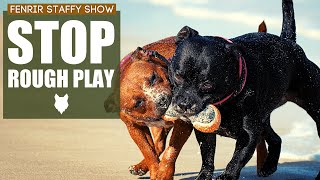 How To Stop Your STAFFORDSHIRE BULL TERRIER PLAYING ROUGH