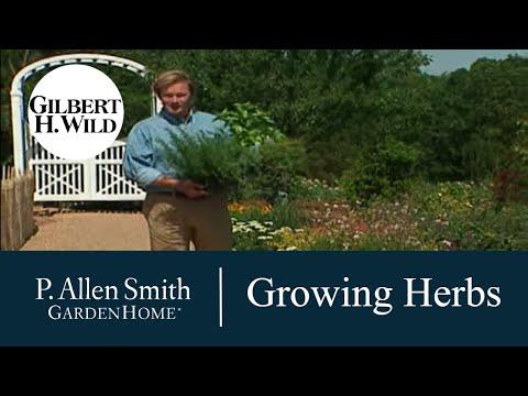Tips on Growing Herbs | Garden Home 704