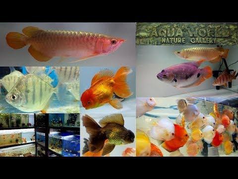Aqua World Aquarium Fish Store Thane