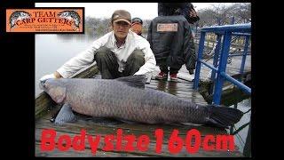 冬の鯉釣りのはずが・・・ By TeamCarpGettersDVD Vol .108「煩悩の章」